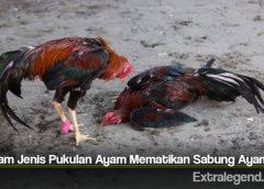 Beragam Jenis Pukulan Ayam Mematikan Sabung Ayam S128