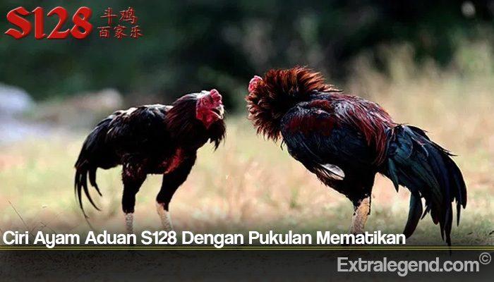 Ciri Ayam Aduan S128 Dengan Pukulan Mematikan