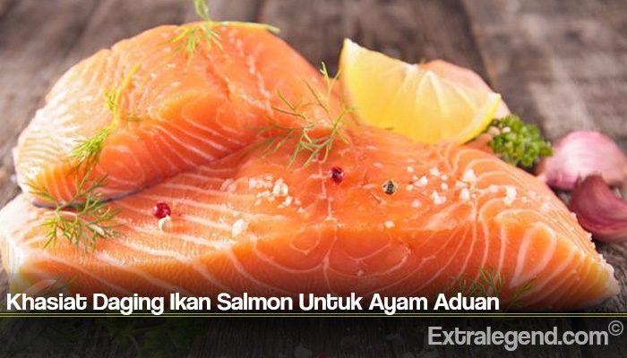 Khasiat Daging Ikan Salmon Untuk Ayam Aduan