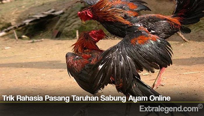 Trik Rahasia Pasang Taruhan Sabung Ayam Online